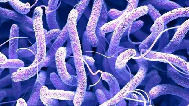 Climate change increasing threats from Vibrio bacteria: Study